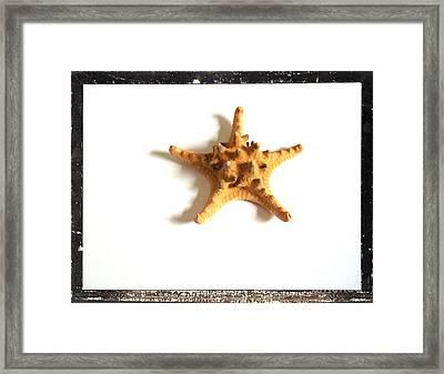 Seashells B Framed Print