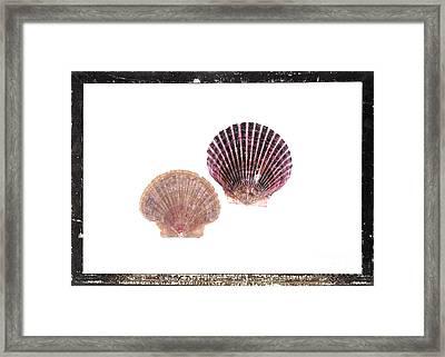 Seashells D Framed Print