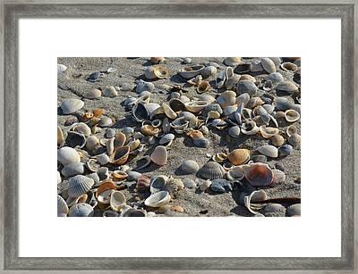 Seashells In The Sand Framed Print by Brenda Thimlar