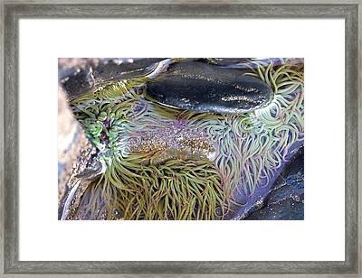 Seashore Rock Pool Framed Print by Dr Keith Wheeler