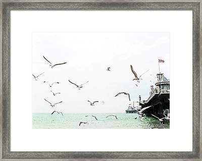 Seaside Seagulls Framed Print