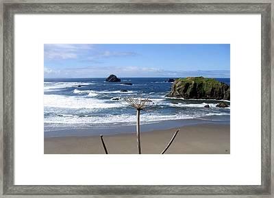 Seaside Solitude Framed Print by Will Borden