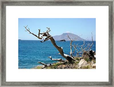 Seaside Tree Framed Print by Phoenix Michael  Davis