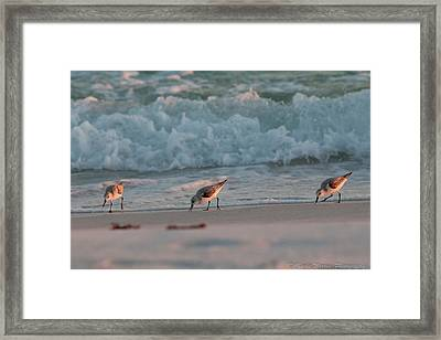 Framed Print featuring the photograph Seaside Trio by Charles Warren