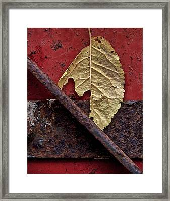 Season Of Decay Framed Print