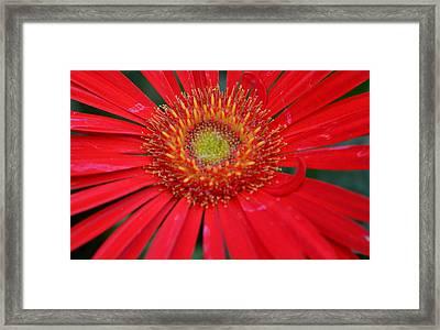 Season Of Love... Framed Print by Tanya Tanski