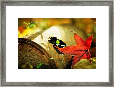 Season Of Rust Framed Print