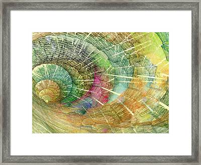 Season Of The Shell Framed Print by Betsy Knapp