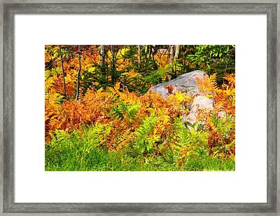 Seasonal Change Framed Print by George Ramondo