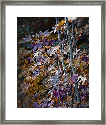 Seasonal Changes Framed Print by Michael Putnam