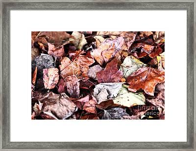 Seasons Change Framed Print by John Rizzuto