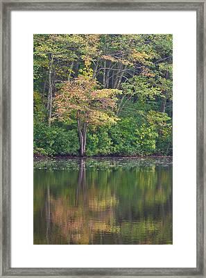 Seasons Change Framed Print by Karol Livote