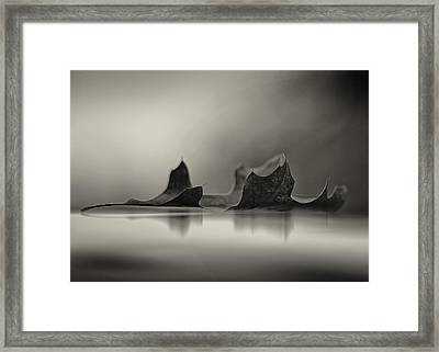 Season's Reflected Framed Print by Joel Olives