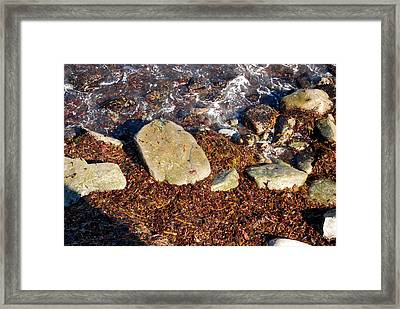 Seaweed By The Shore Framed Print