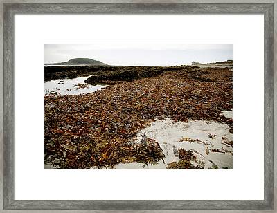 Seaweed Covered Beach Framed Print by Dr Keith Wheeler
