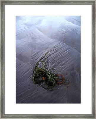 Framed Print featuring the photograph Seaweed Delivery by Peter Mooyman