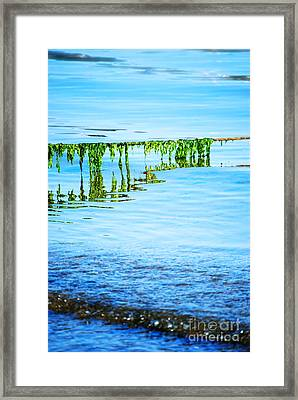 Seaweed Framed Print by HD Connelly