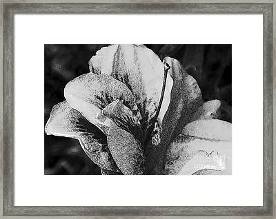 Second Time Around Framed Print by Wide Awake Arts