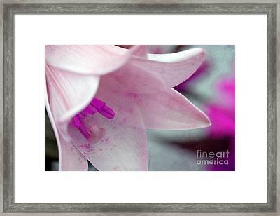 Secrets Framed Print by Angela Bruno