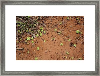 Sedona 08 Framed Print