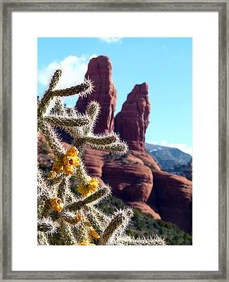Framed Print featuring the photograph Sedona Flowering Cholla by Cindy Wright