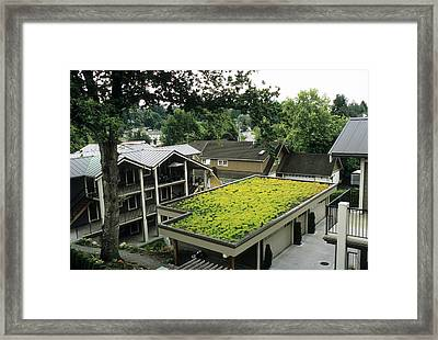 Sedum Roof, Late June Framed Print