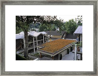 Sedum Roof, Mid-august Framed Print