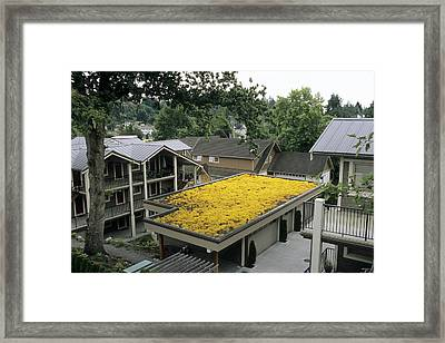 Sedum Roof, Mid-july Framed Print