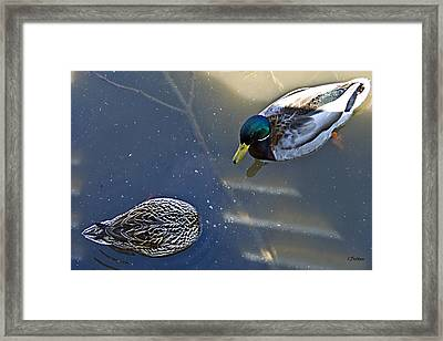 See Anything Framed Print by Kat Besthorn