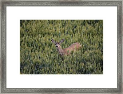 See Me? Framed Print by Melissa  Maderos