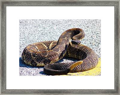 See My Rattles Framed Print by Jeanette Oberholtzer