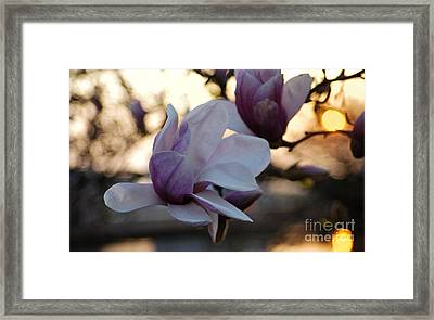 See You Tomorrow Framed Print