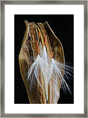 Seed Pod-3- St Lucia Framed Print by Chester Williams