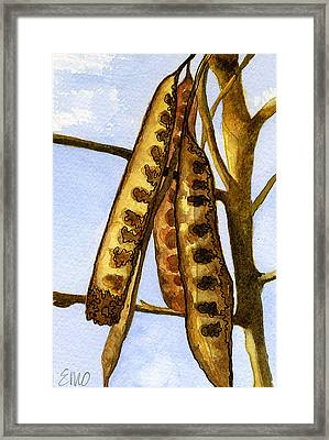 Seed Pods Framed Print by Eunice Olson