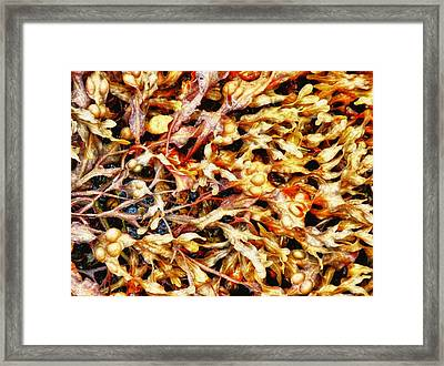 Framed Print featuring the photograph Seedlings by Kelly Reber