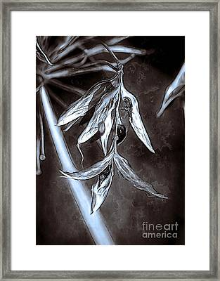 Seeds And Seedpods Framed Print by Judi Bagwell