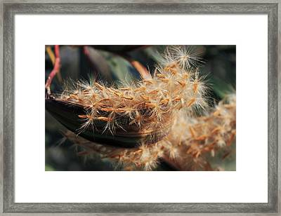 Seeds Framed Print by Joana Kruse