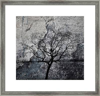 Seeds Of Stone  Framed Print by Jerry Cordeiro