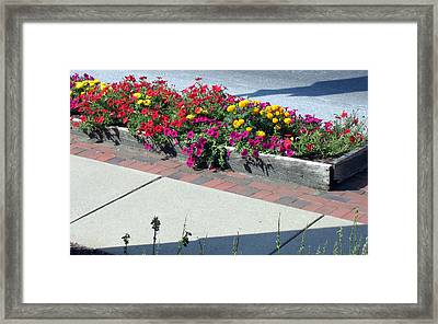 Seeing Beauty Framed Print by Marlene Robbins