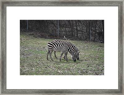 Seeing Double Framed Print by Tammy Price