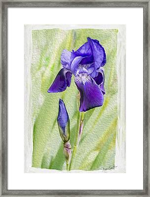 Seeing Purple Framed Print