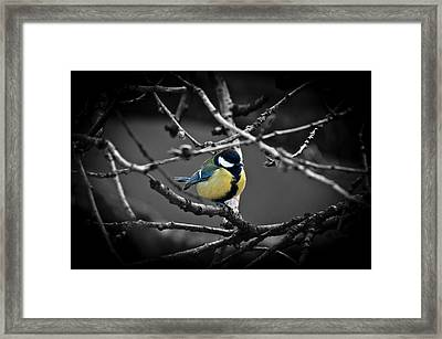Selective Bird Framed Print
