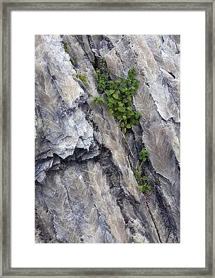 Selenite Swallow-tail Crystals Framed Print