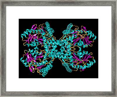 Selenocysteine Synthase Enzyme Molecule Framed Print by Laguna Design