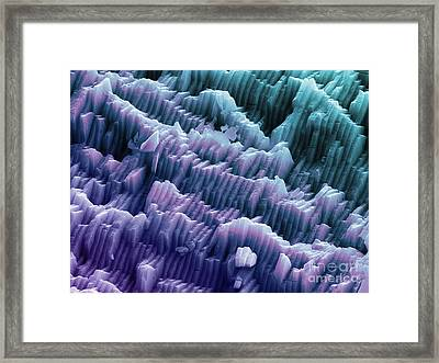 Sem Of A Blue Mussel Shell Framed Print by Ted Kinsman