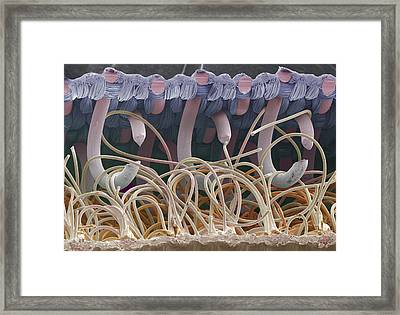 Sem Of A Fastener Framed Print by Power And Syred