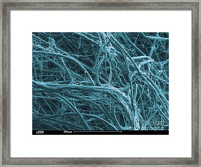 Sem Of Green Algae Filaments Framed Print by Ted Kinsman