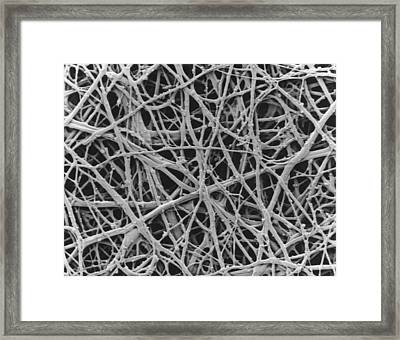 Sem Of Internal Membrane Of Hen Eggshell Framed Print by