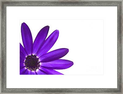 Senetti Deep Blue Framed Print by Richard Thomas