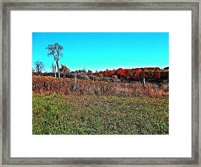 Framed Print featuring the photograph Sentinel by Christian Mattison
